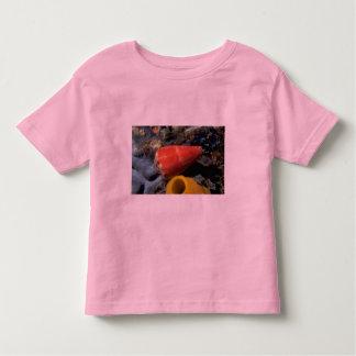 Cono del ratón (mus) del conus Shell Camisetas