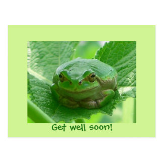 Consiga la rana verde del pozo pronto - con postal