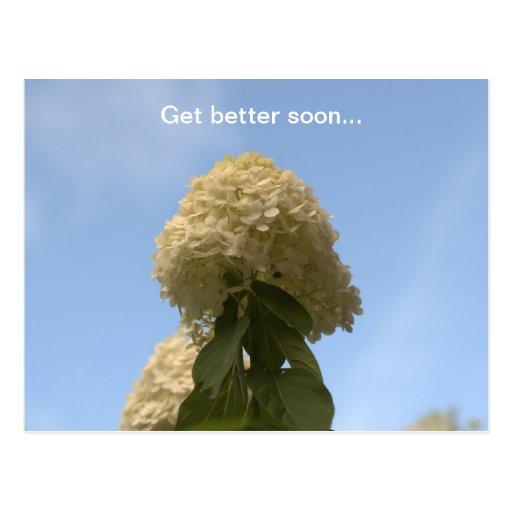 Consiga una mejor pronto postal del Hydrangea de l