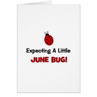 Contar con una pequeña maternidad del insecto de j felicitaciones