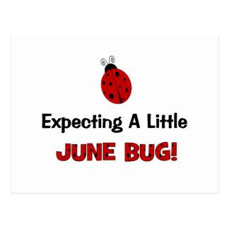 Contar con una pequeña maternidad del insecto de j postales