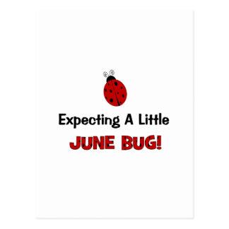Contar con una pequeña maternidad del insecto de postal