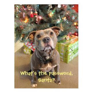 Contraseña de Pitbull para la postal del navidad