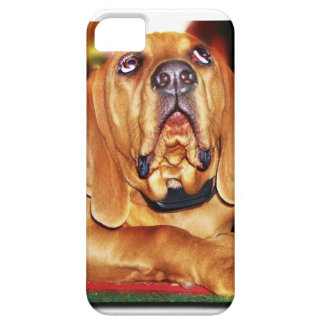 Coonhound lindo iPhone 5 protectores