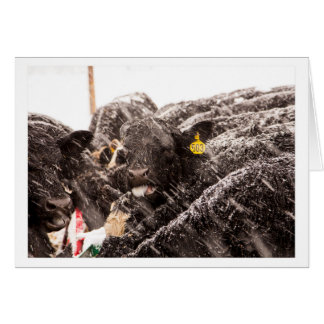 Copos de nieve de cogida de la vaca en tarjeta del