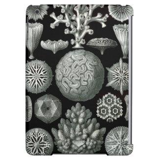 Coral de Ernst Haeckel Hexacorallia