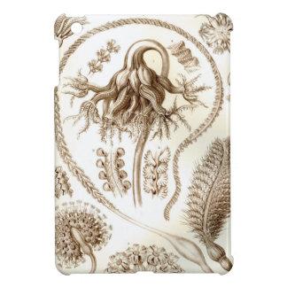 Coral de Ernst Haeckel Pennatulida