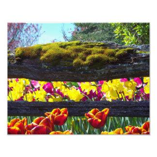 Coral floral foto