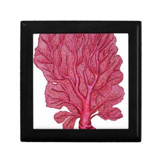 Coral rosado caja de regalo