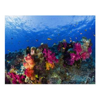 Corales suaves en el filón bajo Fiji Tarjeta Postal