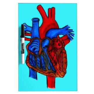 Corazón anatómico dibujado mano de la aguamarina pizarra blanca