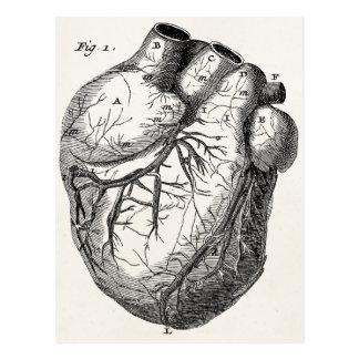 Corazones cardiacos retros de la anatomía del postal