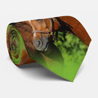 Corbata Dos caballos hermosos de la castaña en el Sun