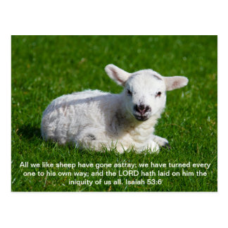 Cordero del Passover, Isaías 53 Tarjeta Postal