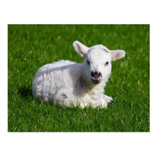 Cordero lindo recién nacido en hierba verde postal