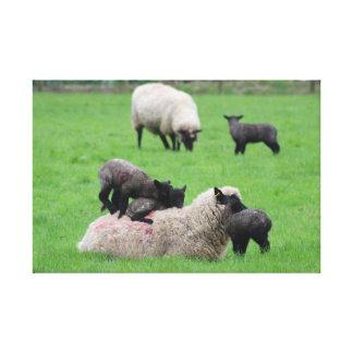 Cordero y ovejas de la primavera lienzo
