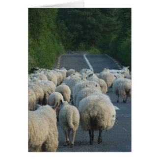 Corderos de los caminos de las ovejas tarjeta de felicitación