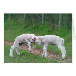 Corderos juguetones tarjeta de felicitación