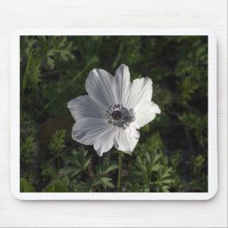 Coronaria blanco de la anémona del Galilea ( Alfombrilla De Ratón