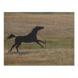 Corra con la postal del viento