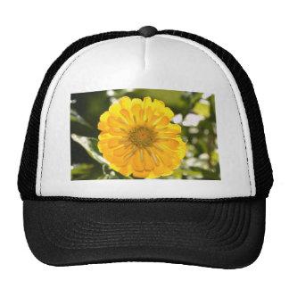 Cosmo amarillo gorra