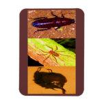 Costa Rica salvaje - arañas, cucarachas e insectos Imanes Rectangulares