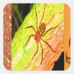 Costa Rica salvaje - arañas, cucarachas e insectos Colcomanias Cuadradas Personalizadas