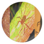 Costa Rica salvaje - arañas, cucarachas e insectos Plato De Cena