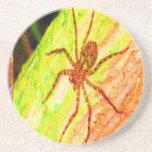 Costa Rica salvaje - arañas, cucarachas e insectos Posavasos Para Bebidas