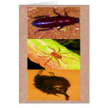 Costa Rica salvaje - arañas, cucarachas e insectos Tarjetón