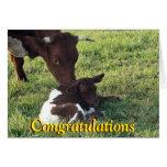 Cow&calf-personalizar de Pinzgauer cualquier Felicitacion
