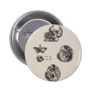 Cráneo - Icones Anatomicae Chapa Redonda De 5 Cm