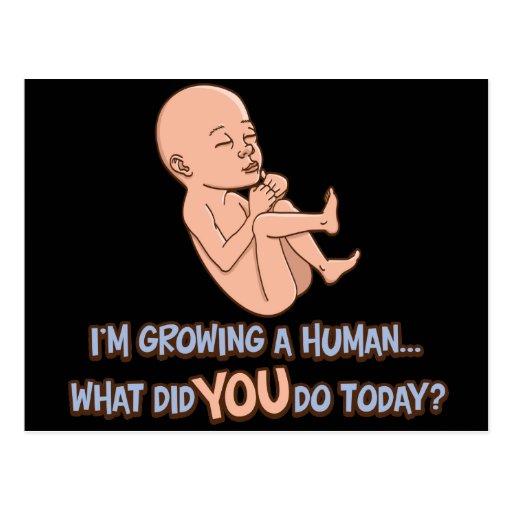Crecimiento de una maternidad humana tarjetas postales