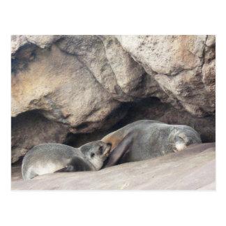 Cría 1 de la madre y de foca postal
