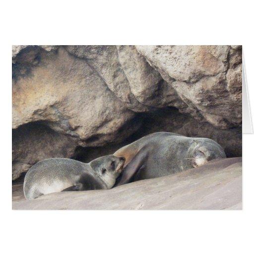 Cría 1 de la madre y de foca felicitación