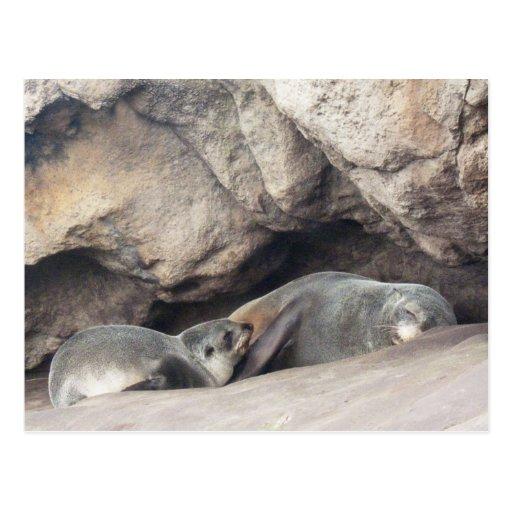 Cría 1 de la madre y de foca tarjetas postales
