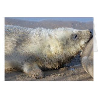 Cría de foca tarjeta de felicitación