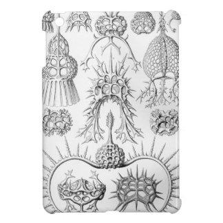 Criaturas del mar de Ernst Haeckel Spyroidea