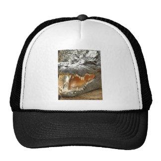 Crocodile.jpg Gorra