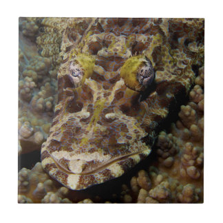 Crocodilefish Cymbacephalus Beauforti Azulejo Cuadrado Pequeño
