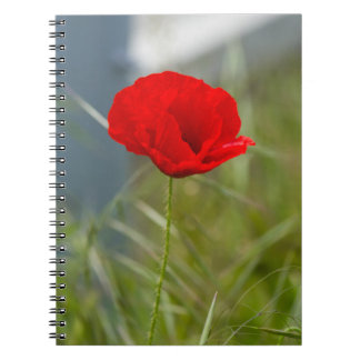 Cuaderno Amapola salvaje