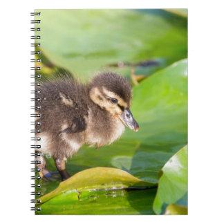 Cuaderno Anadón de Brown que camina en las hojas del lirio
