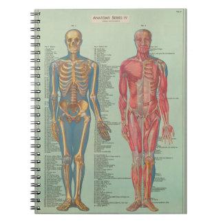 Cuaderno - Anatomía