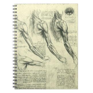Cuaderno Anatomía del brazo y del hombro de Leonardo da