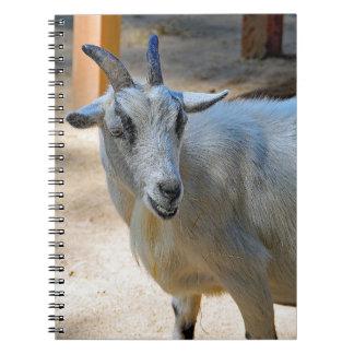 Cuaderno Cabra 540