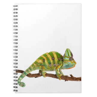 Cuaderno Camaleón