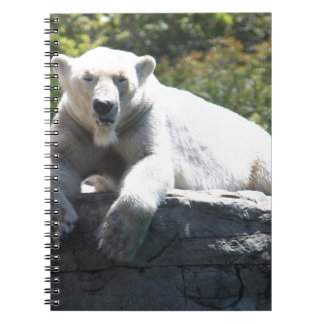 Cuaderno Cerveza polar