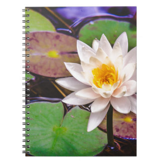 Cuaderno Cojín de lirio en el agua