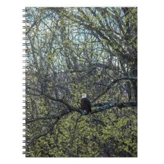 Cuaderno Conciencia de Eagle