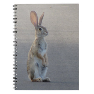 Cuaderno Conejo de conejo de rabo blanco